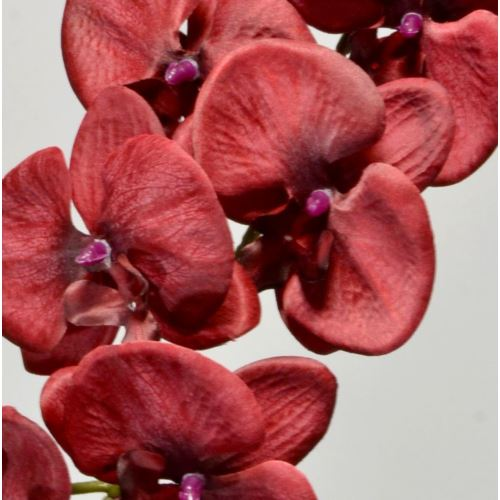 STORCZYK PHALENOPSIS 90CM OLD RED