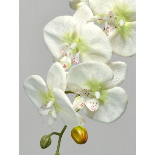 STORCZYK PHALENOPSIS 90CM WHITE CREAM GREEN