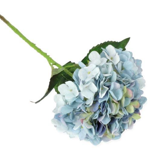 HORTENSJA POJEDYNCZA 57CM / 13-26 LT BLUE