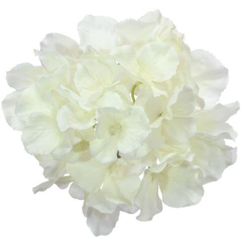 Hortensja główka 15cm sun644 white cream