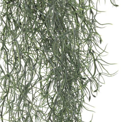 ZWIS ASPARAGUS 90CM POWDER GREEN