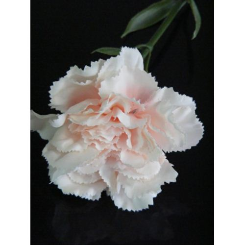 Gozdzik SUN005 2036 powder peach