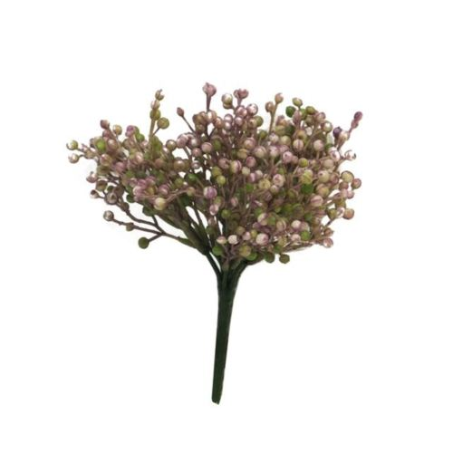Berry bush Albi purple 24cm