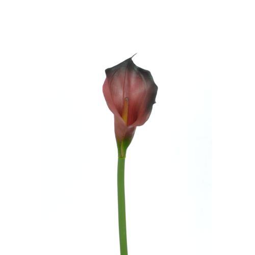 CALLA p./0312 72cm burgundy