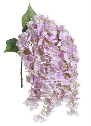 Hortensja wiszaca x5 l.wiosenny
