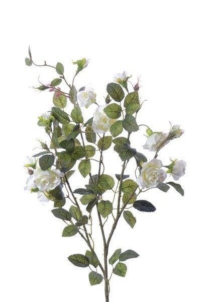 Róża gałązka drobna sun103 cr white