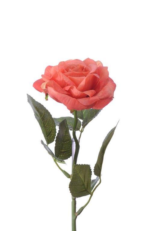 Rose pick RT Rodin orange 32cm
