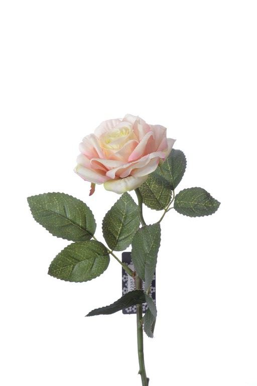 Rose pick RT Rodin peach 32cm