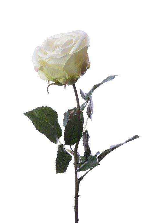 (Best) RT Rosa Servati cream 68cm