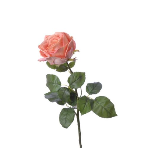 (Best) RT Rosa Servati peach 68cm natural touch