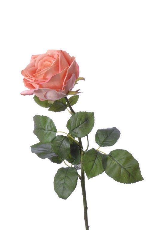 (Best) RT Rosa Servati peach 68cm