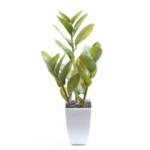 Golden Leaf Zamia 914263GR