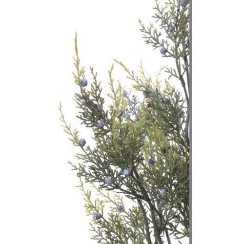 Jałowiec bukiet 50cm