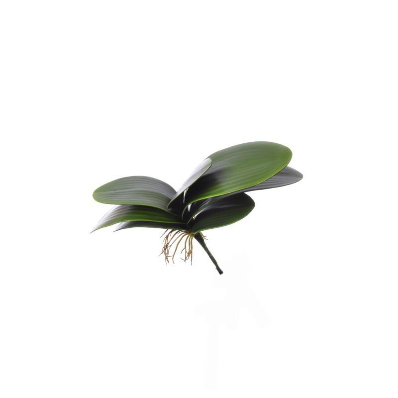 (Best) Small Phalaenopsis leaves x7 29cm