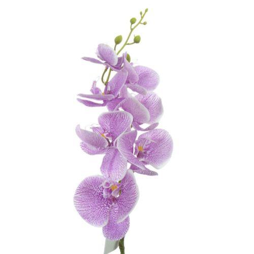 Storczyk guma 85cm Aj45598 Purple