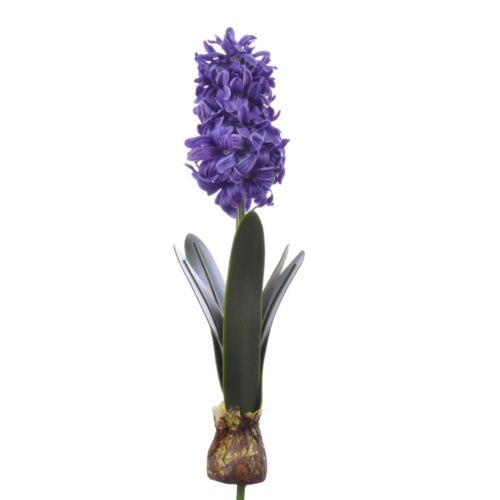 Hiacynt z cebulą 39cm aj62140 violet