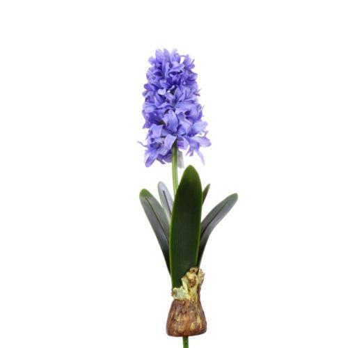 Hiacynt z cebulą 49cm aj62140  violet blue
