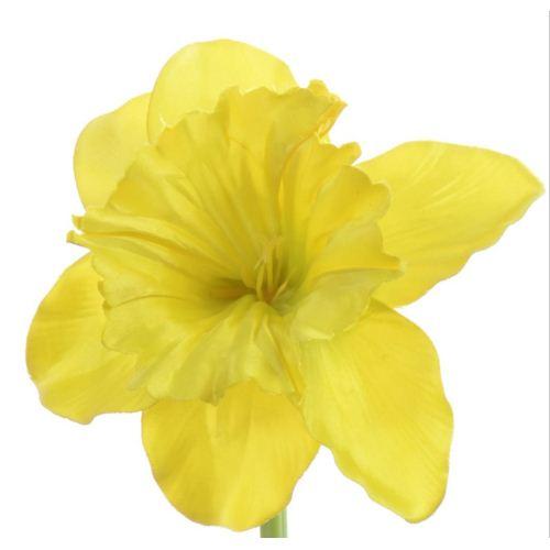 Żonkil pojedynczy 50cm sun410 new yellow