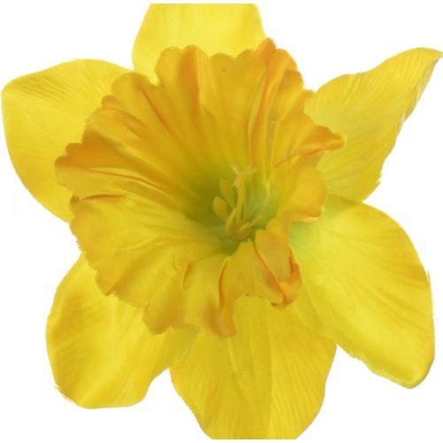 Żonkil pojedynczy 50cm sun410 dark yellow