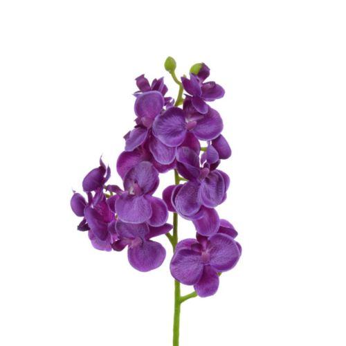 Storczyk drobny 58cm sun396 purple