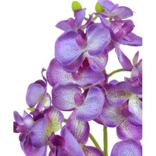 Storczyk drobny 58cm sun396 violet green