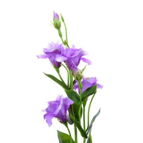Eustoma gałązka 83cm sun345 lt violet
