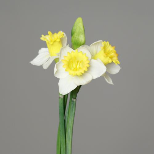 daffodil-bundle with bud x 5,PUR, 43 cm, white-yel
