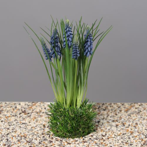 Szafirki w trawie, 23 cm, blue, 24/96