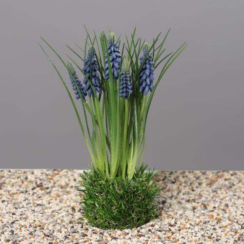 Muscari in grass, 23 cm, blue, 24/96