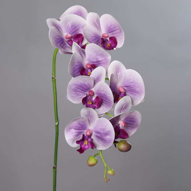 Orchid Phalaenopsis with 8 flowers, 104 cm, lavend