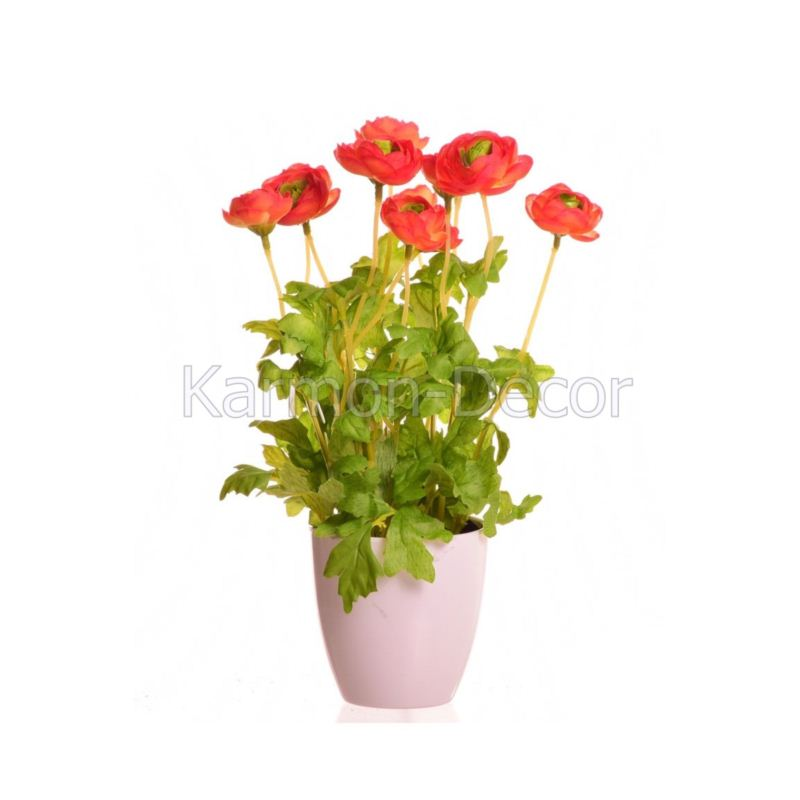 ranunculus  in pot, 28 cm, orange, 12/48