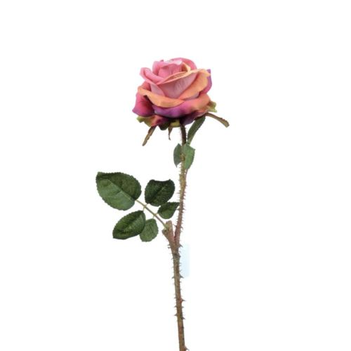 Wildrose 42cm rosenholz