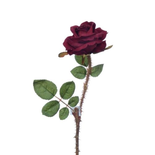 Wildrose 42cm rot