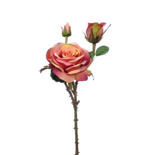 Wildpolyanthaedelrose x3 50cm rosenholz