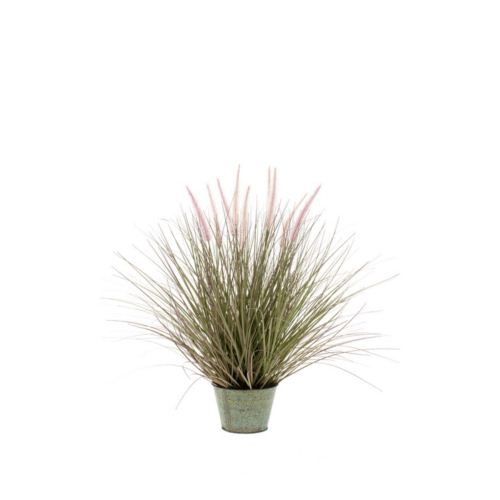 Grass Pennisetum  99cm in zinc pot 23cm