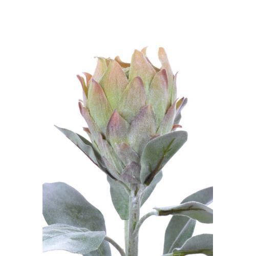 Protea Barbighera 72 cm green