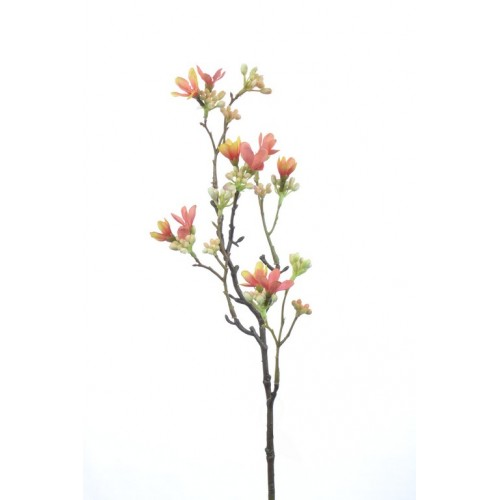 Heptacodium 5-faeh 51cm orange
