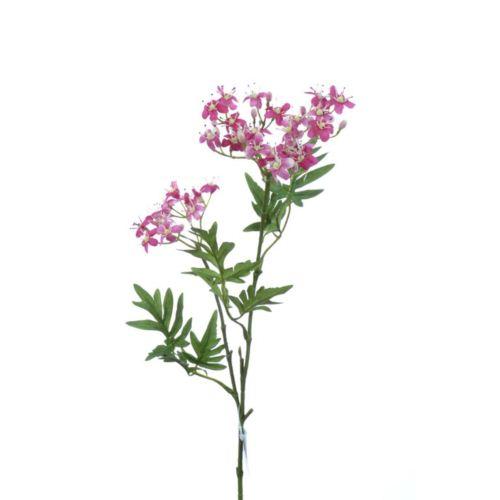 """Sambucus """"Dziki Bez"""" x2 67cm rose-gem."""