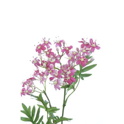 Sambucusblütenzweig x2 67cm rose-gem.