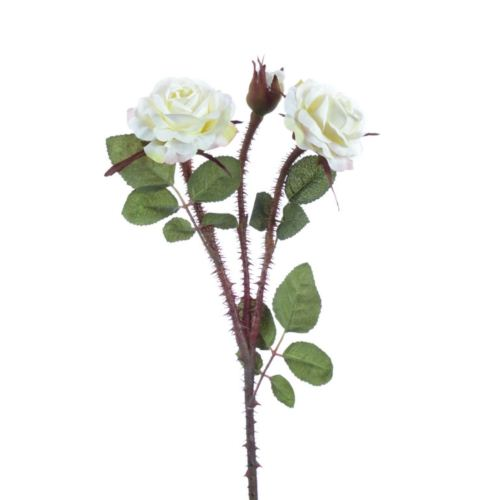Wildpolyantharose x3 51cm elfenbein