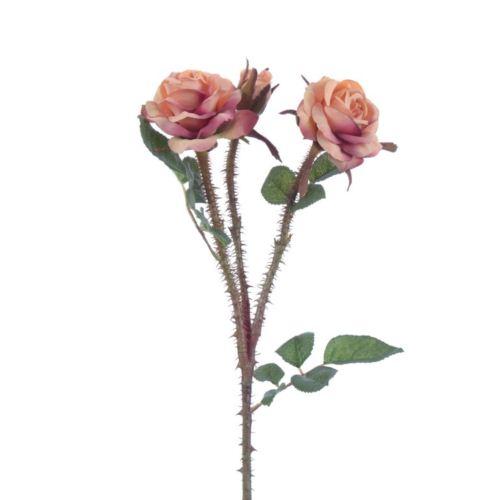 Wildpolyantharose x3 51cm rosenholz