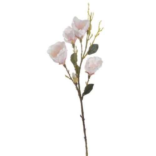 Galazka magnolii 95cm