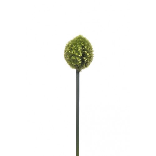 Allium Arles green small 48cm