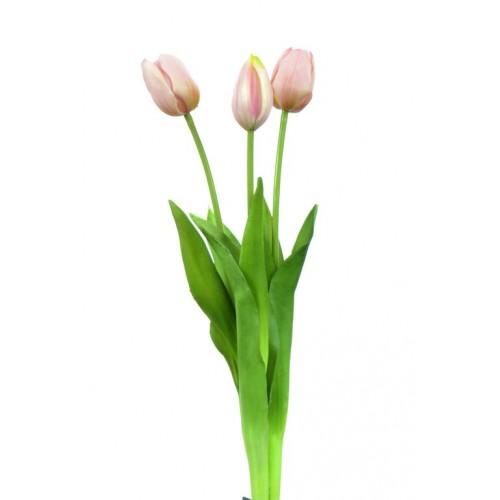 Tulipan Sally bud  3some pink bukiet 3szt.