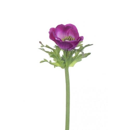 (Best) Anemone Dalton beauty 36cm