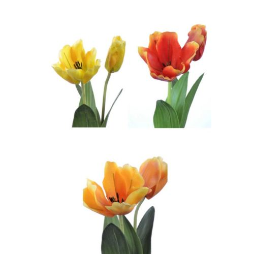 -50% Tulipan LUX mix yellow yellow c orange karton 24szt