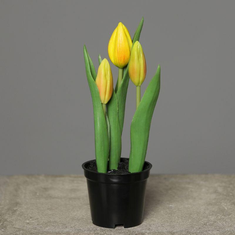 Tulips in Pot PU18 cm yellow
