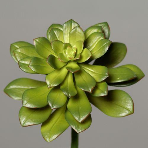 Succulent diameter 20 cm 26 cm green