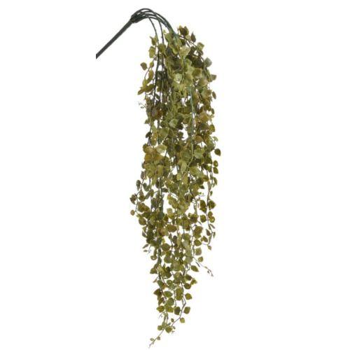 Bluszczyk 65cm
