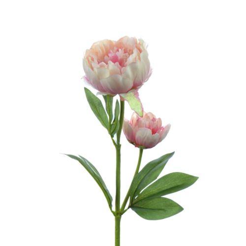 Peonia x2  60 cm  pink